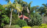 Palm Grove Cottages Bay of Islands